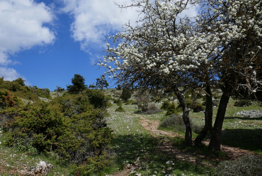 21.04.2017 Delphi walk to Livadi plateau (18).JPG